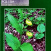Echa Polesia 2-3/2006
