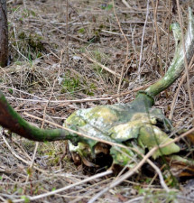 Wiosenna wędrówka nad Żuraw