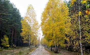 Polski Tryb - skąd wzięła się  nazwa tej leśnej drogi?