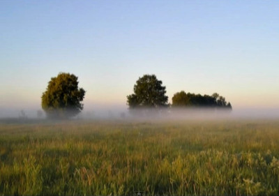 Ja tutaj powrócę, gdzie są mgły i rosy…