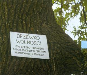 Tabliczka na Drzewie Wolności w Dawidgródku