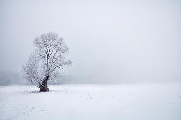 """Wiktor Bosak """"Poleskie mgły"""""""