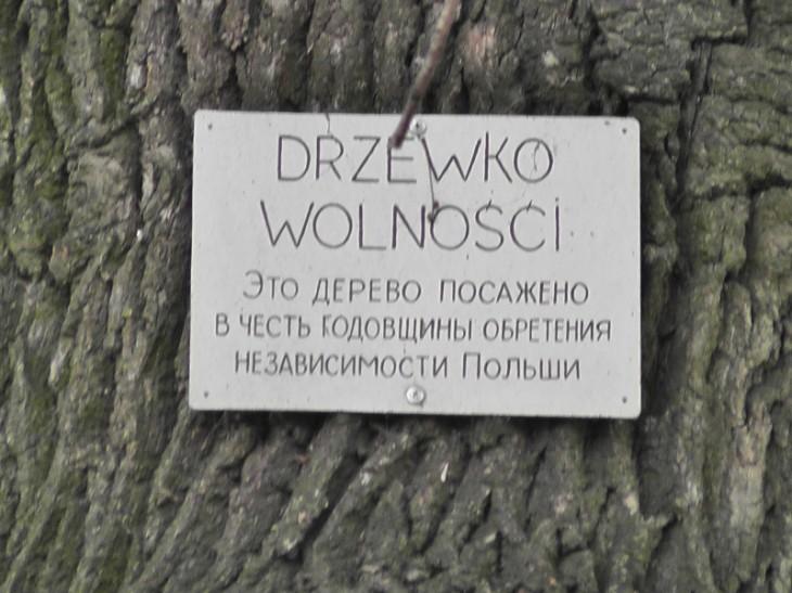 Tablica pamiątkowa na drzewku wolności