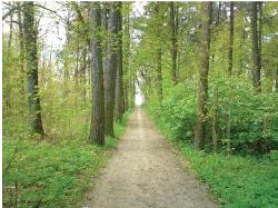 Droga w parku, prowadząca do grobu Romana Skirmunta, wiosna 2000 roku