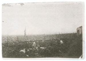 15. Sowchoz Zaria-Swoboda, lipiec 1942