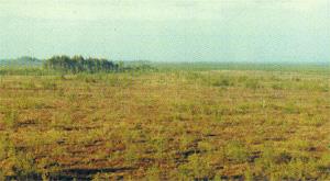Olmańskie Biota (fot. A. Abramćuk)
