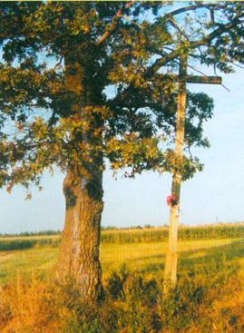 Miejsce wsi Białej, własności babci Traugutta