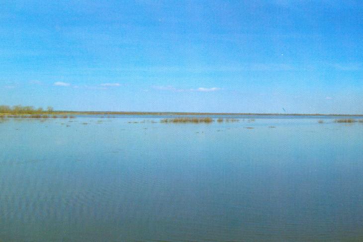 Łąka turowska za rzeką Strumień