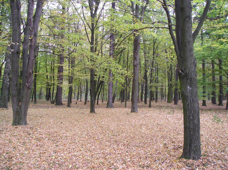 Park w Mańkiewiczach