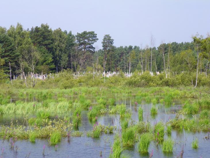 Cmentarz nad wodą