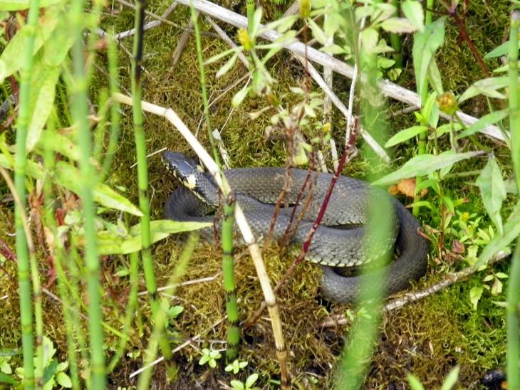 Pełno tutaj wężów i żmij