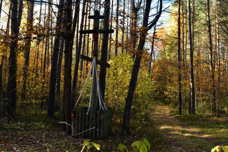 Na rozstaju leśnych ścieżek