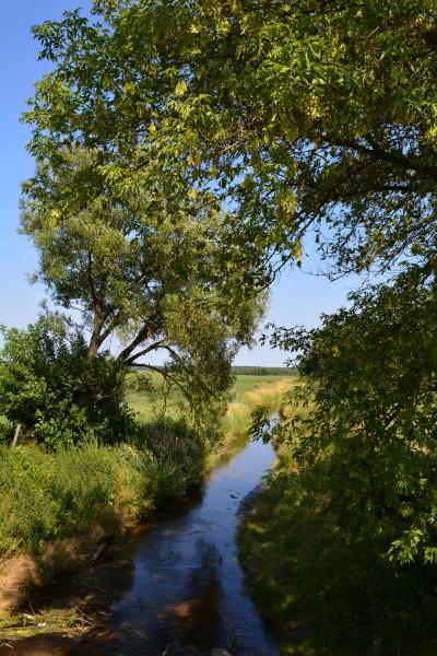 Tak obecnie (po melioracji okolicznych bagien) wygląda rz.Lewa Leśna (obecnie tą nazwe przypisano głównemu kanałowi melioracyjnemu przy wjęździe do Szereszewa od strony Prużan)