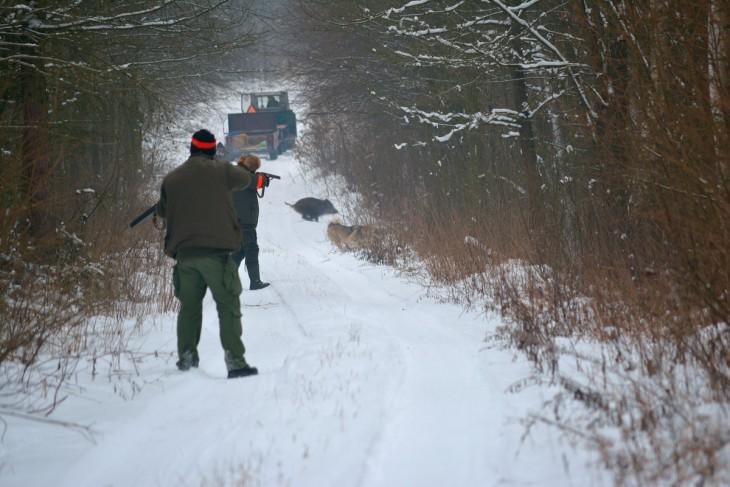 ... dziki z lewej, dziki z prawej!, - żaden miot nie był pusty. Taka obfitość zwierzyny cieszy serce każdego myśliwego