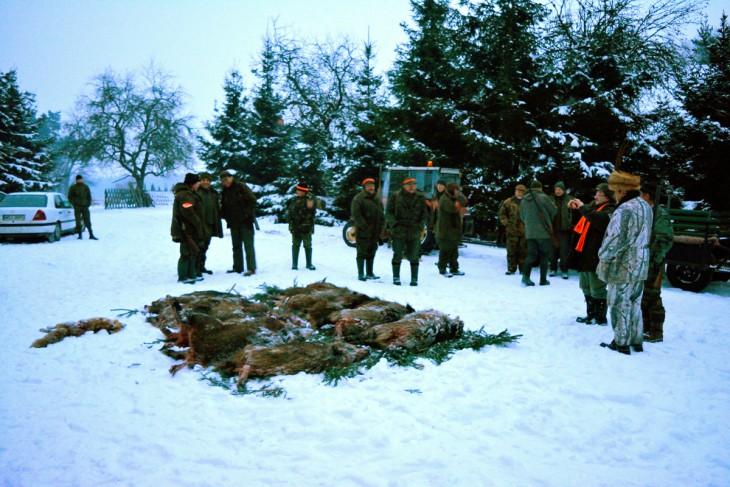 """Na zakończenie polowania uroczysty """"pokot"""" upolowanej zwierzyny. Na pokocie 10 dzików i jeden lis - bardzo dobry rezultat jednego dnia polowania grupy z 23 myśliwych. Wszyscy czekają na przybycie łowczego koła, któremu zostanie złożony meldunek o przebiegu polowania, zostanie wybrany król i wice-król dzisiejszych łowów oraz król ... pudlarzy, bo św.Hubert uśmiecha się jedynie wybranym"""